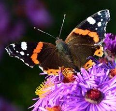 pixabay-butterfly-1710323.jpg